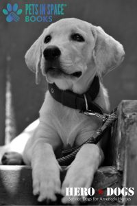 Black-and-white photo of a puppy on a leash with Pets in Space and Hero Dogs logos
